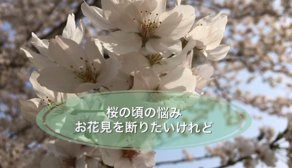 桜の頃の悩み お花見を断りたいけれど